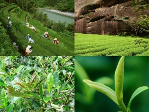 горы Чже Шань