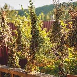 сбор травы для чая